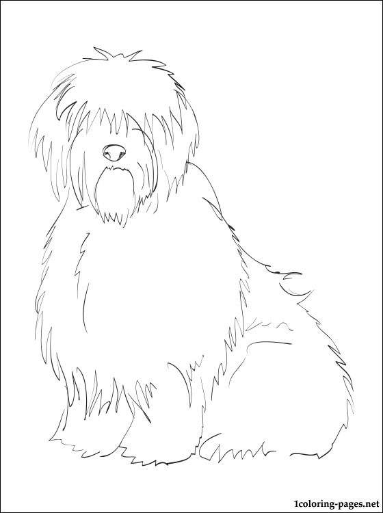 Old English Sheepdog coloring #5, Download drawings