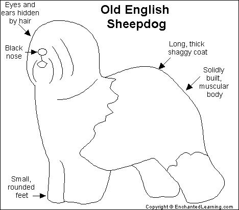 Old English Sheepdog coloring #17, Download drawings