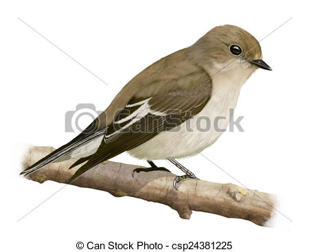Old World Flycatcher clipart #6, Download drawings