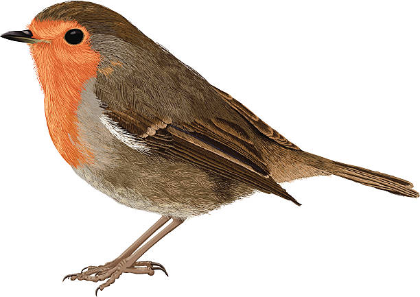 Old World Flycatcher clipart #11, Download drawings