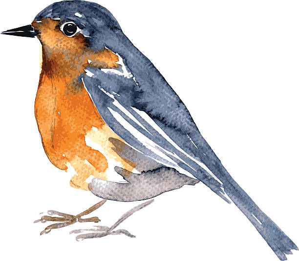 Old World Flycatcher clipart #15, Download drawings