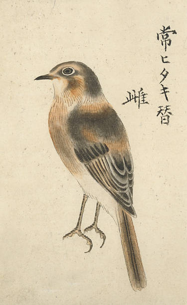 Old World Flycatcher clipart #8, Download drawings
