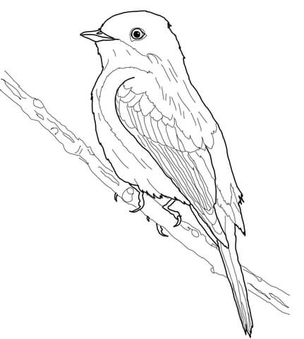 Old World Flycatcher coloring #7, Download drawings