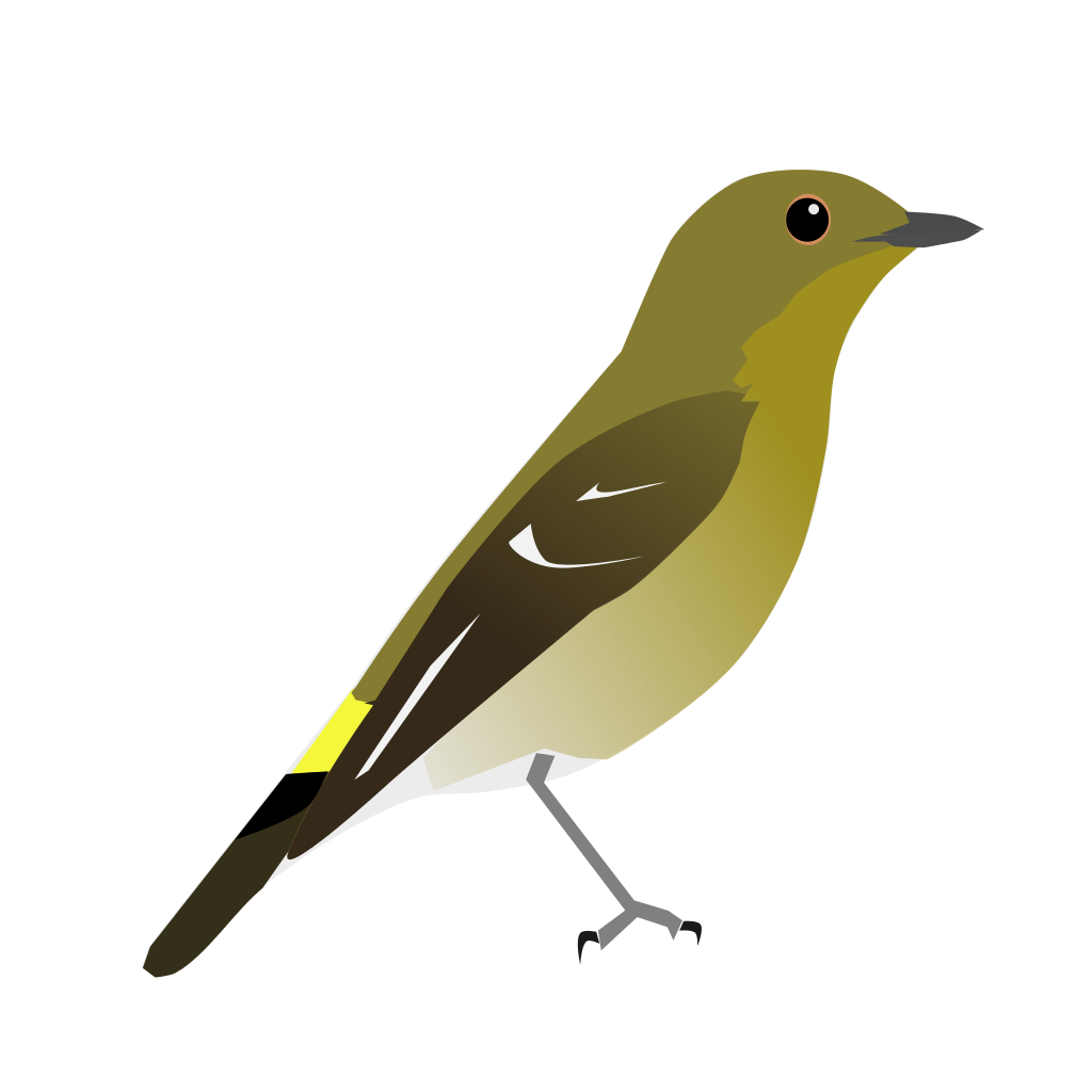 Old World Flycatcher svg #14, Download drawings