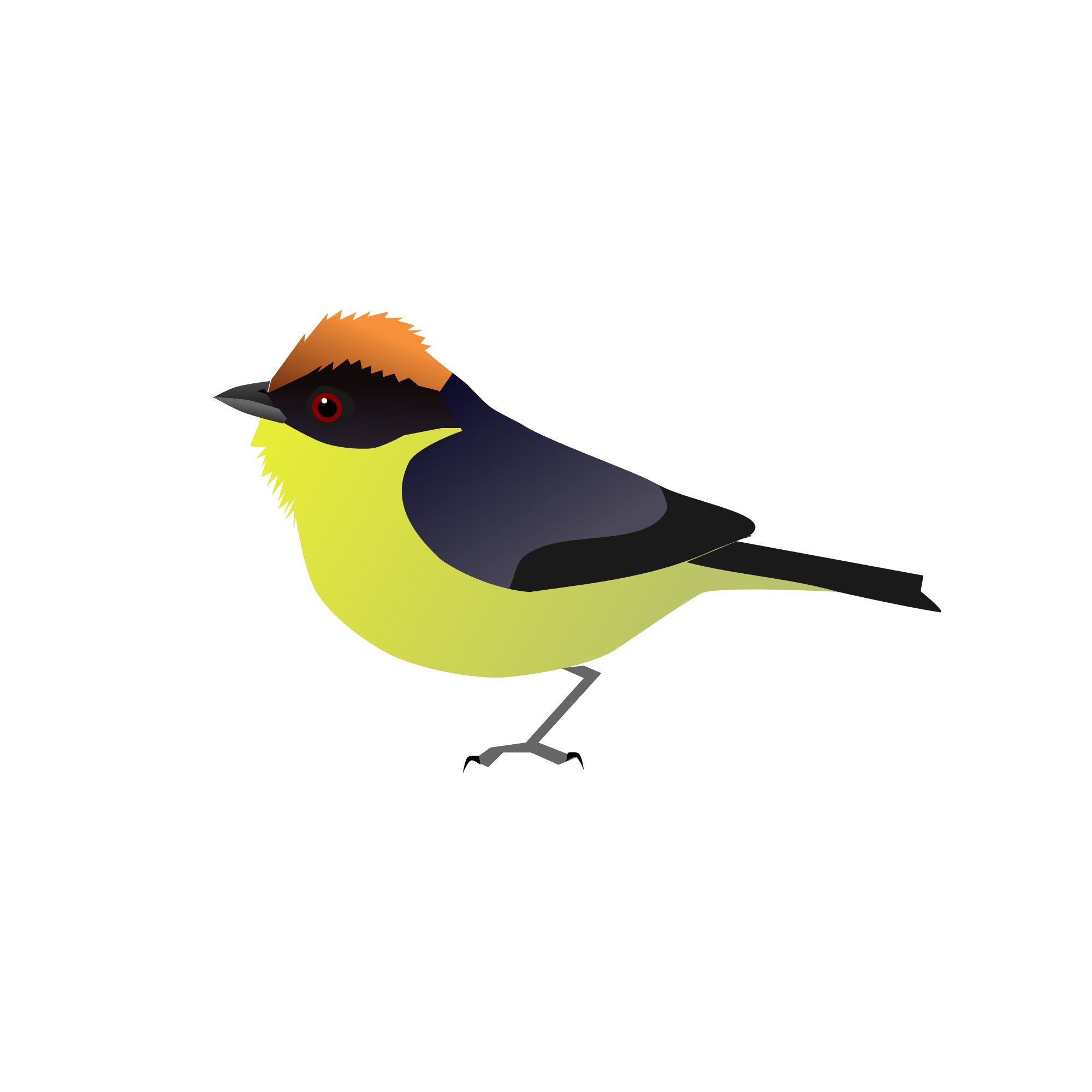 Old World Flycatcher svg #9, Download drawings
