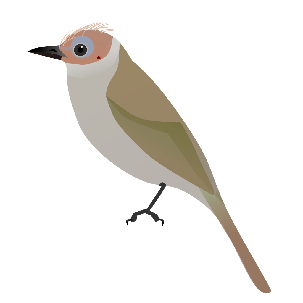 Old World Flycatcher svg #20, Download drawings