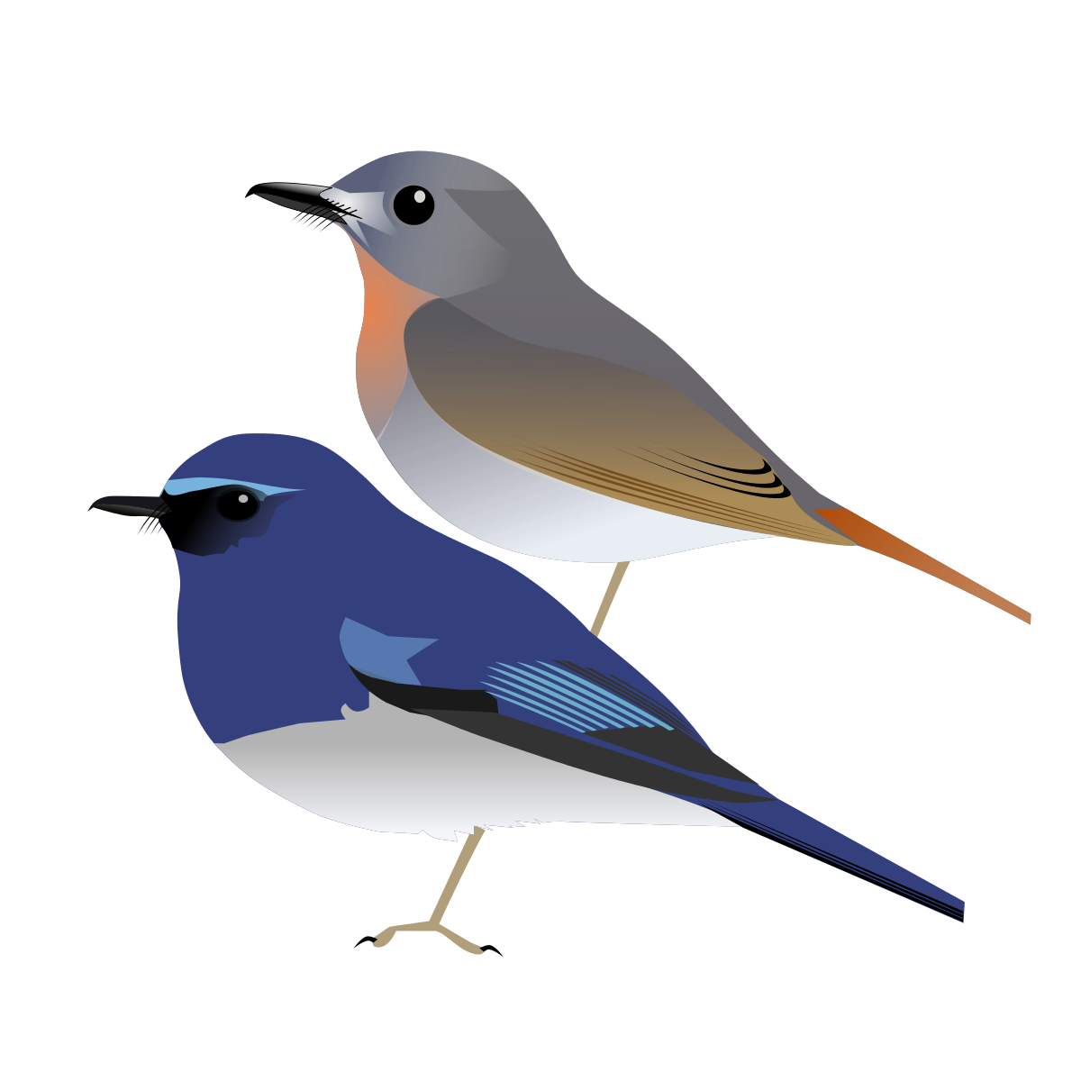 Old World Flycatcher svg #8, Download drawings