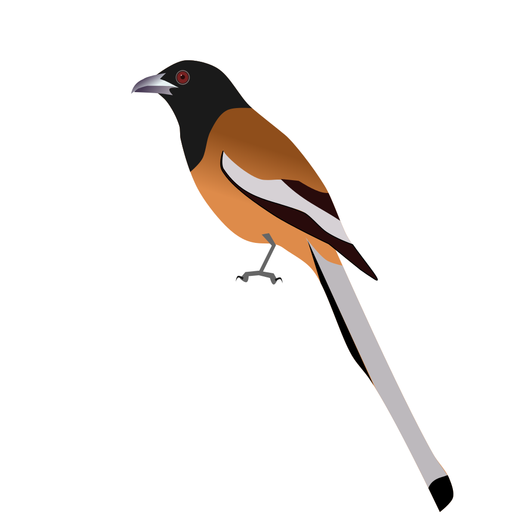 Old World Flycatcher svg #4, Download drawings