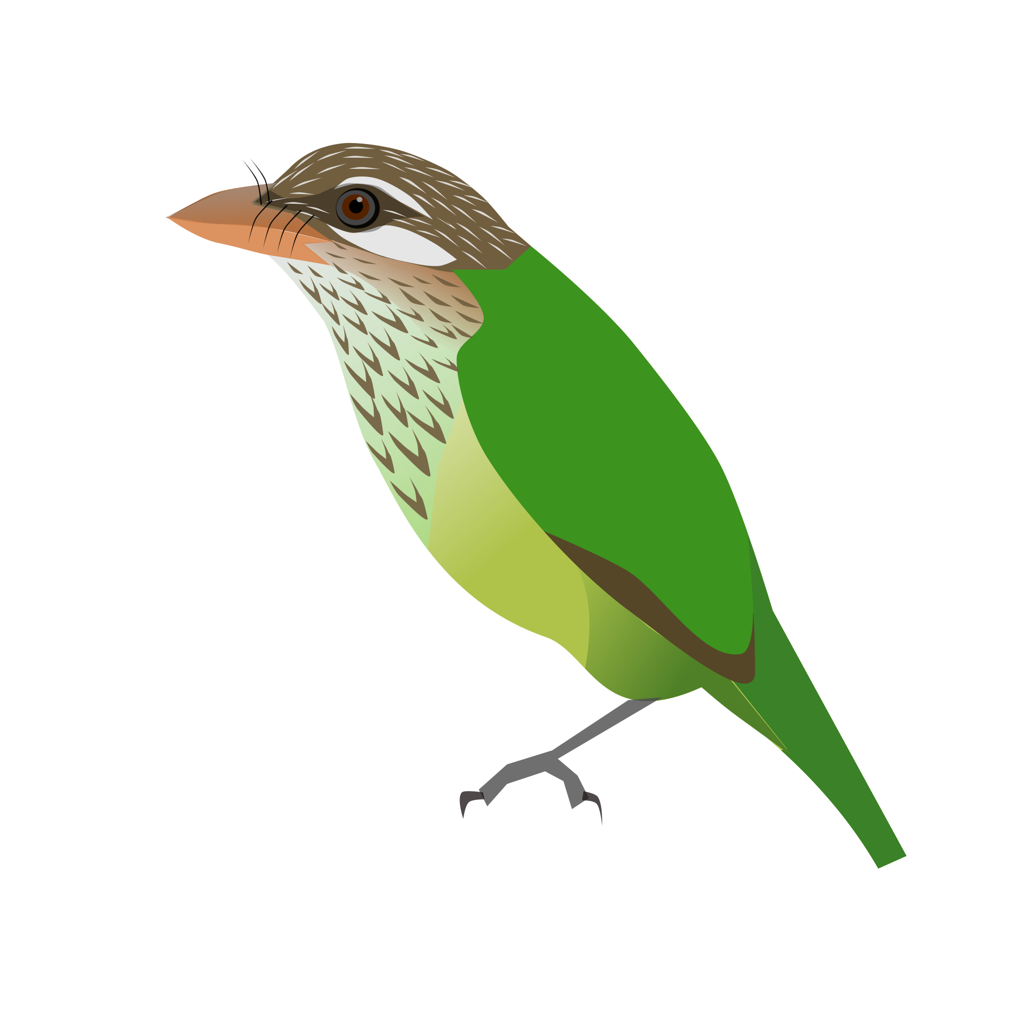 Old World Flycatcher svg #15, Download drawings