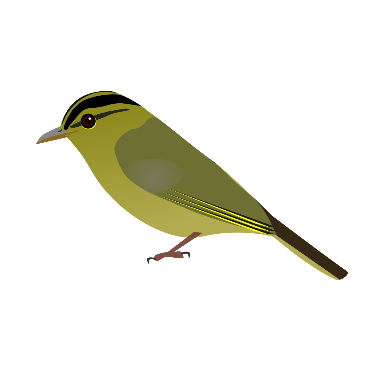 Old World Flycatcher svg #5, Download drawings