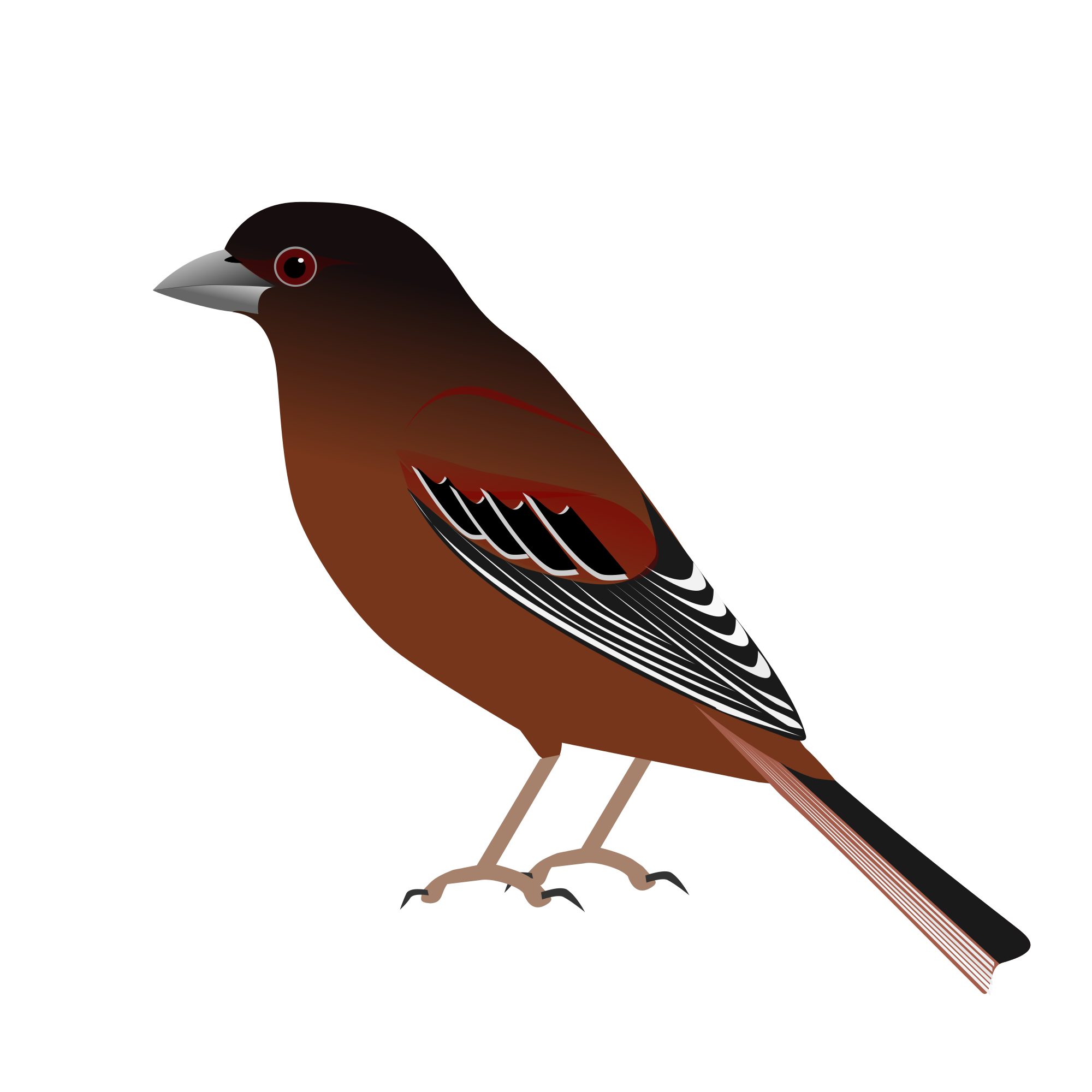 Old World Flycatcher svg #13, Download drawings