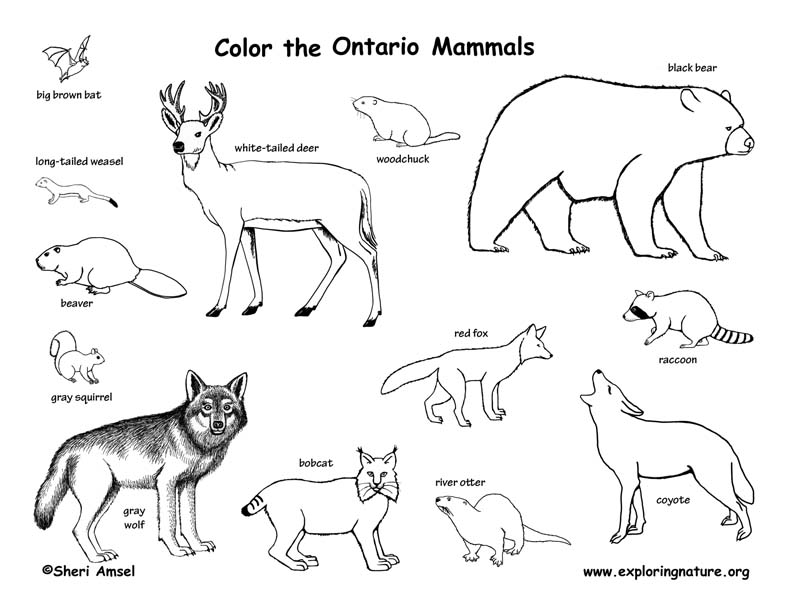 Ontario coloring #6, Download drawings