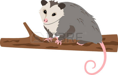 Opossum clipart #12, Download drawings