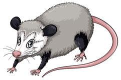 Opossum clipart #11, Download drawings