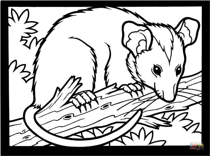 Opossum coloring #17, Download drawings