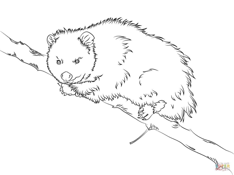 Opossum coloring #11, Download drawings