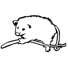 Opossum coloring #4, Download drawings