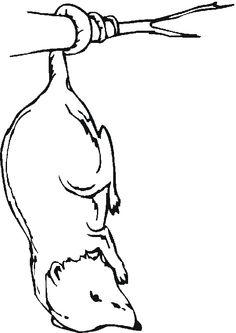 Opossum coloring #19, Download drawings