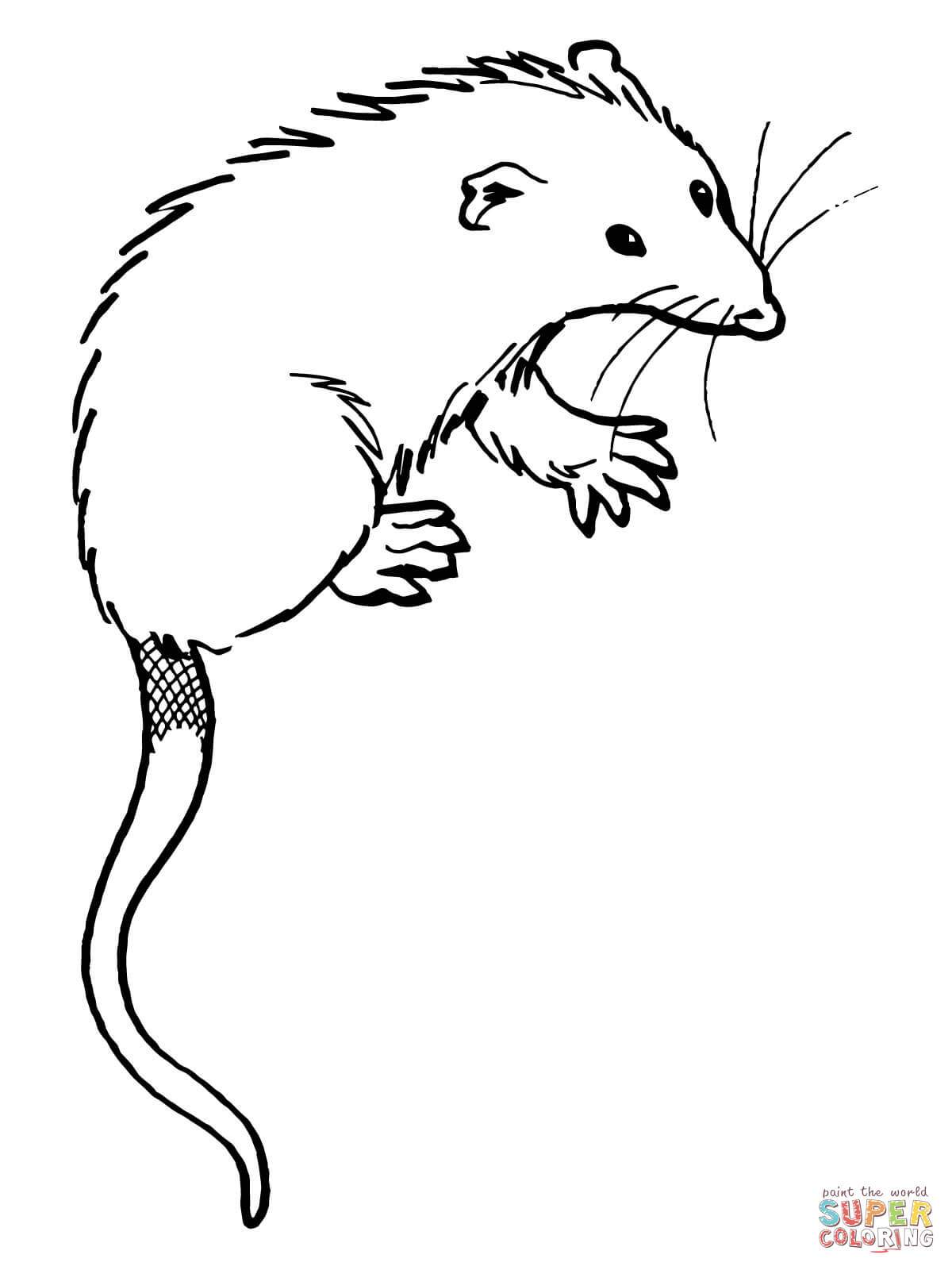 Opossum coloring #13, Download drawings