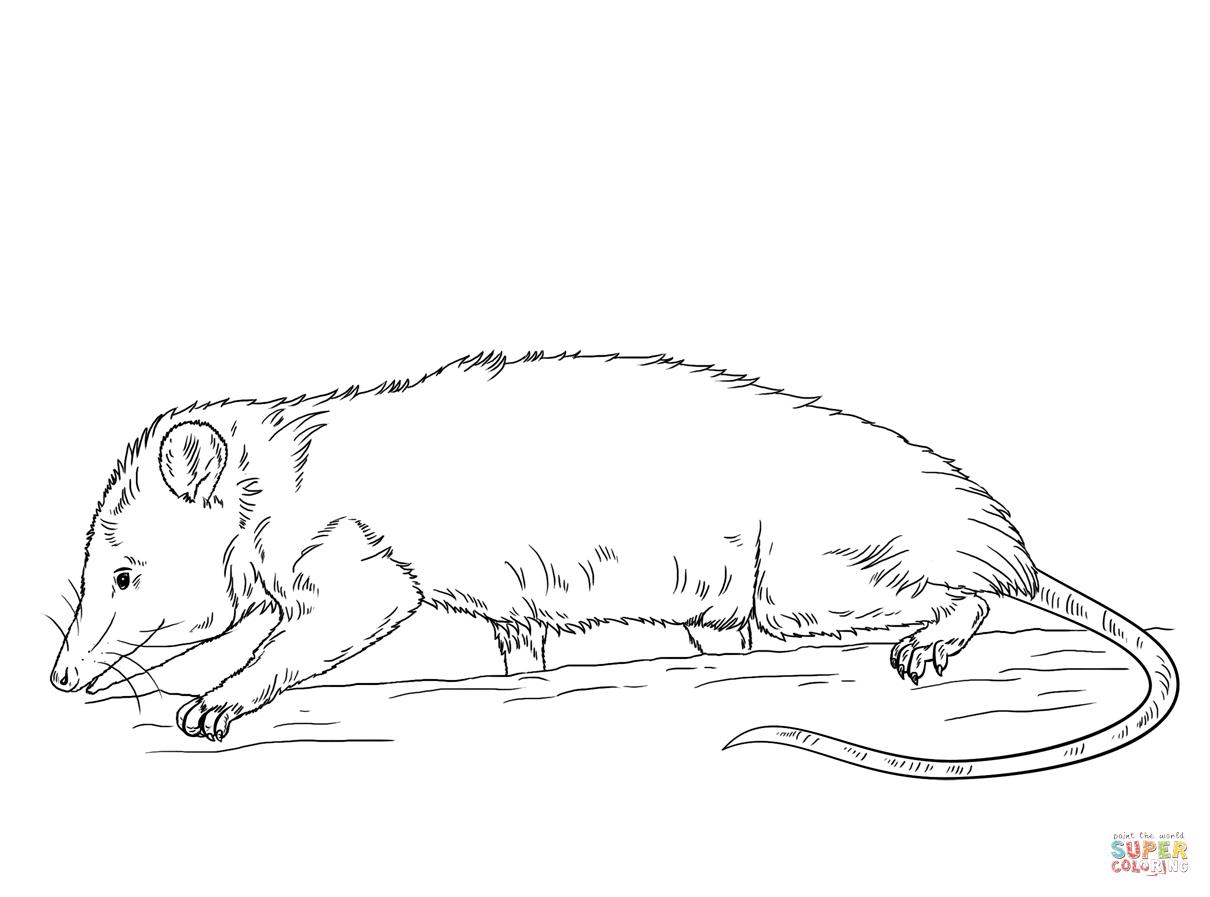 Opossum coloring #15, Download drawings