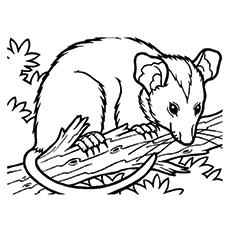 Opossum coloring #10, Download drawings