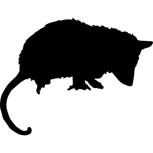 Opossum svg #18, Download drawings