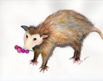 Opossum svg #7, Download drawings