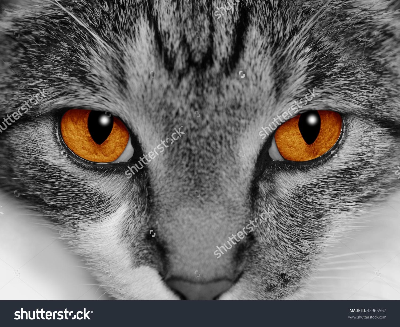 Orange Eyes coloring #9, Download drawings