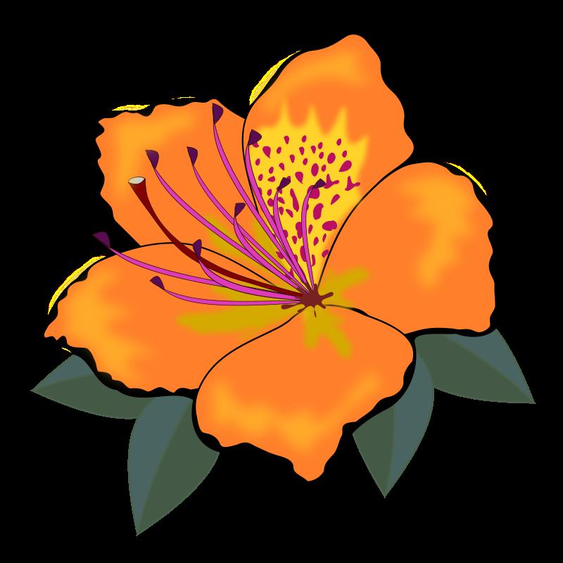 Orange Flower clipart #12, Download drawings