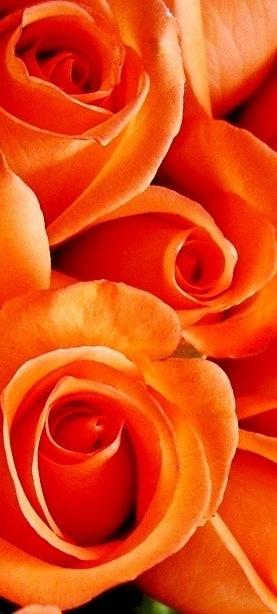 Orange Flower coloring #7, Download drawings
