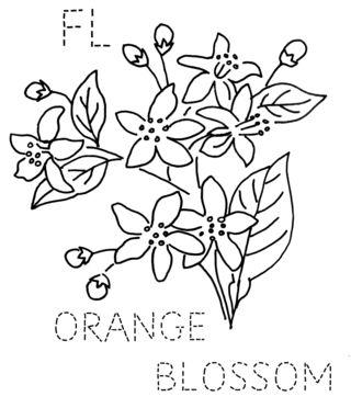 Orange Flower coloring #18, Download drawings