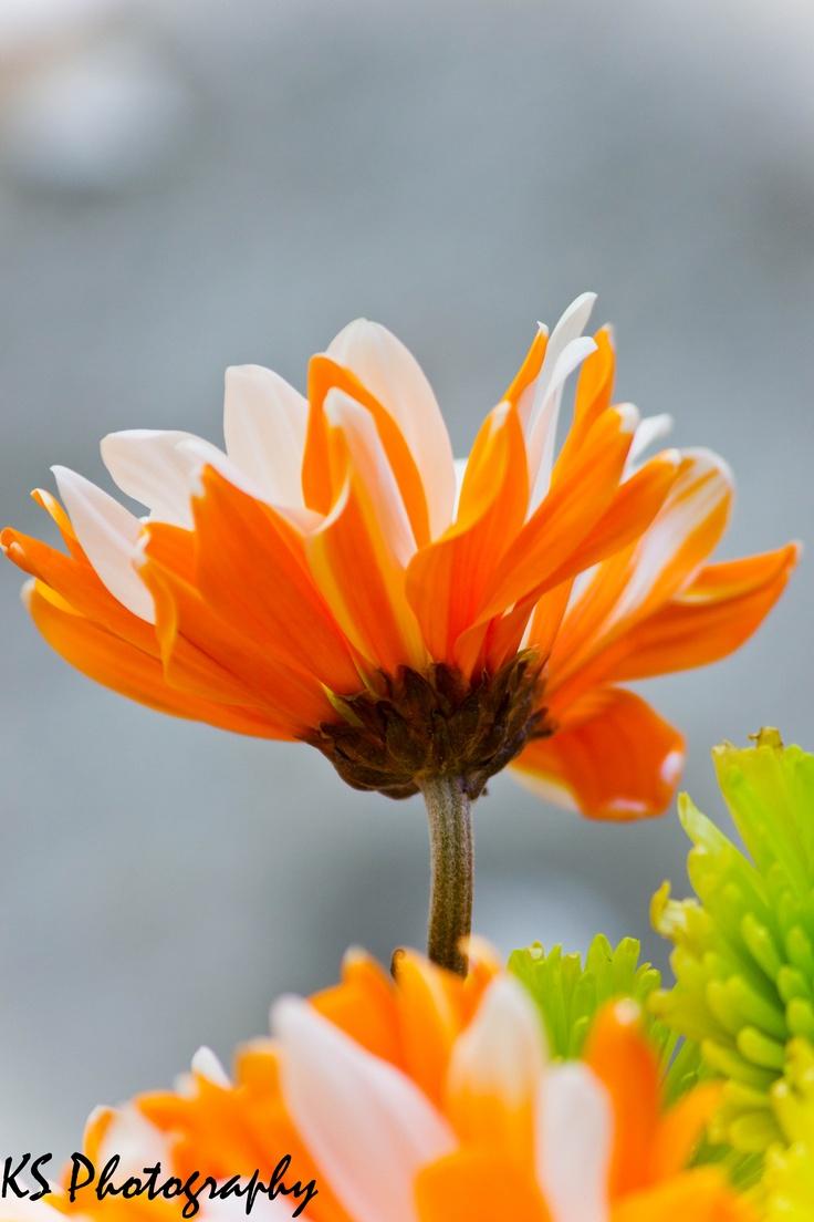 Orange Flower coloring #12, Download drawings