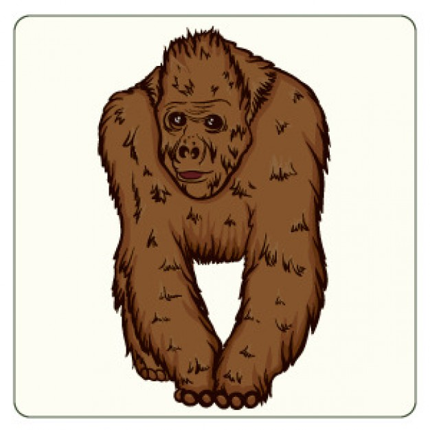 Orangutan clipart #6, Download drawings
