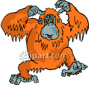 Orangutan clipart #17, Download drawings