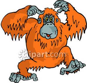 Orangutan clipart #17, Download drawings