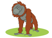 Orangutan clipart #19, Download drawings