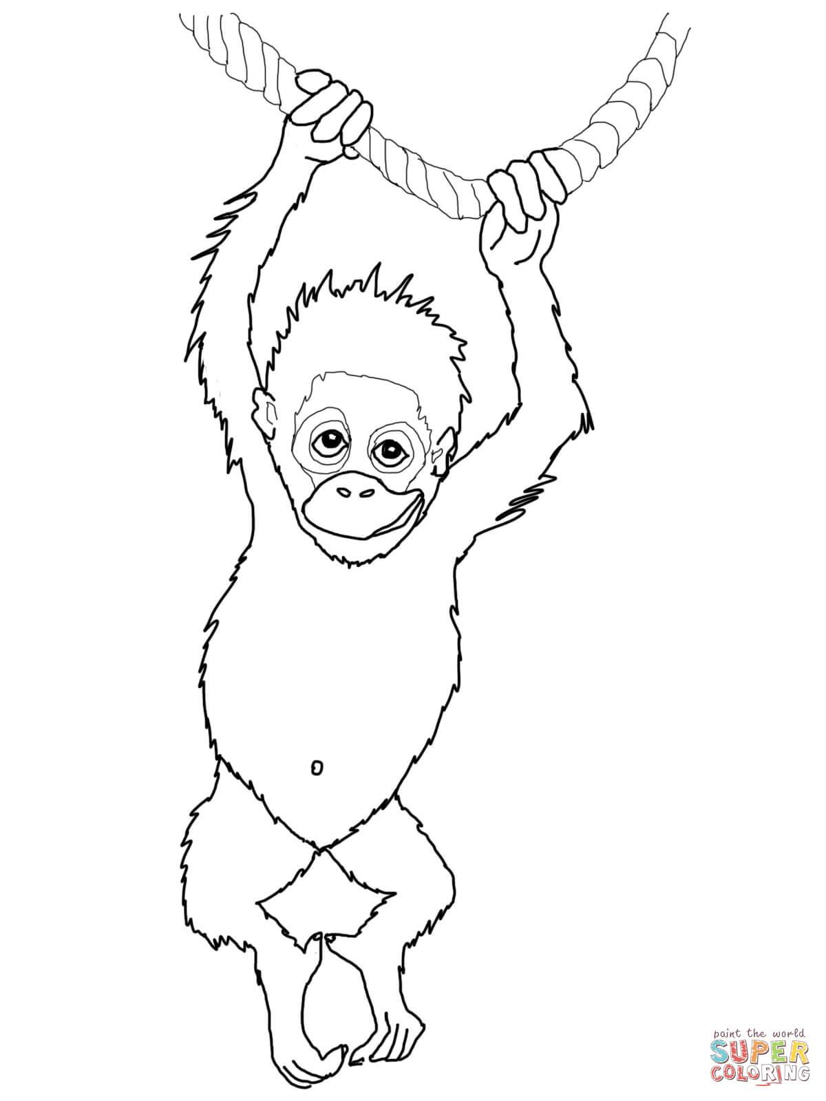 Orangutan coloring #16, Download drawings