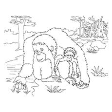 Orangutan coloring #14, Download drawings