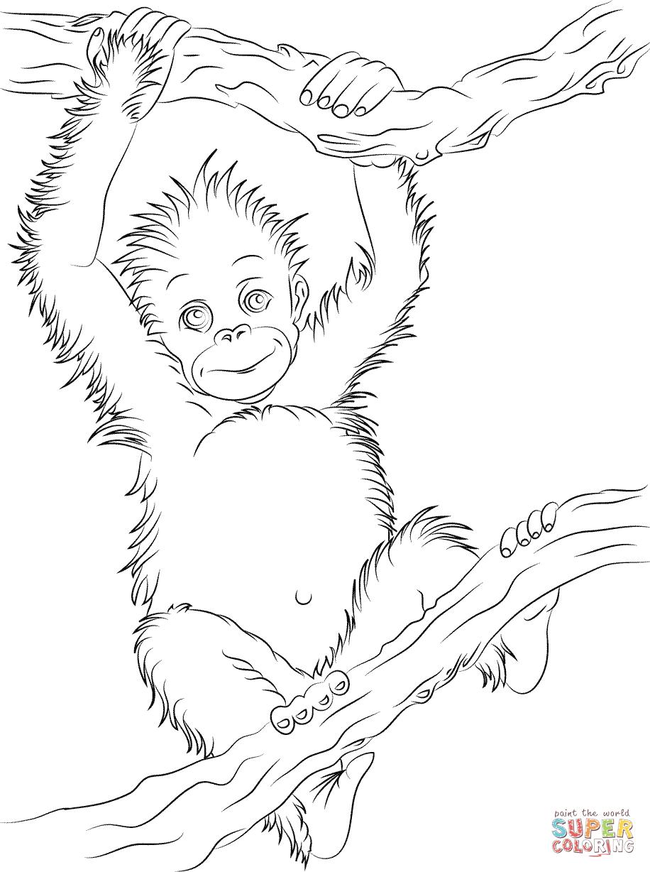Orangutan coloring #11, Download drawings