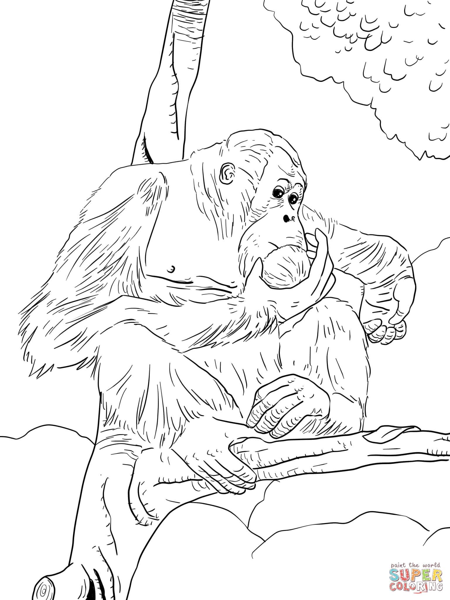 Orangutan coloring #6, Download drawings