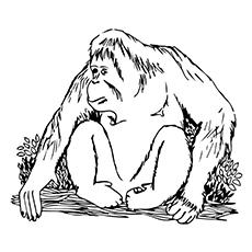 Orangutan coloring #8, Download drawings