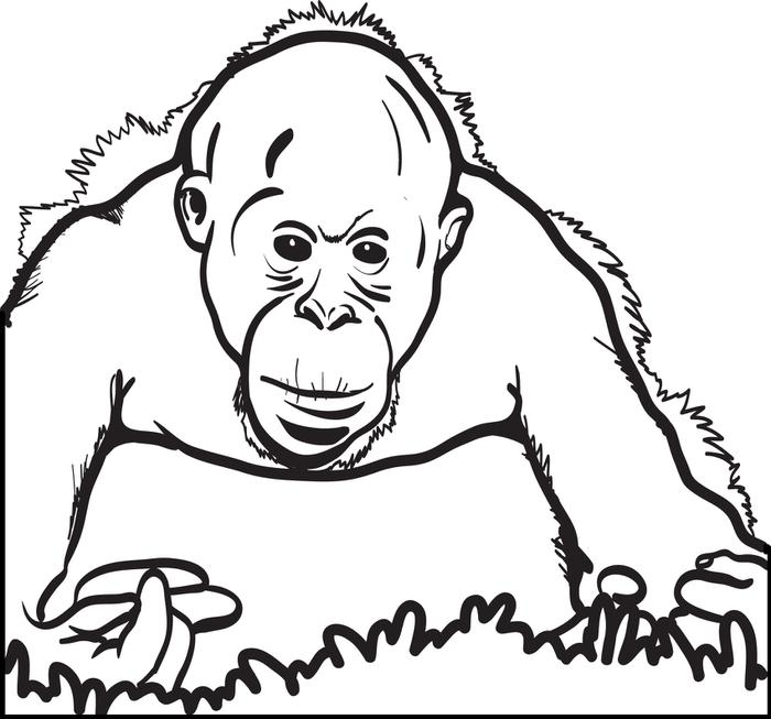 Orangutan coloring #10, Download drawings