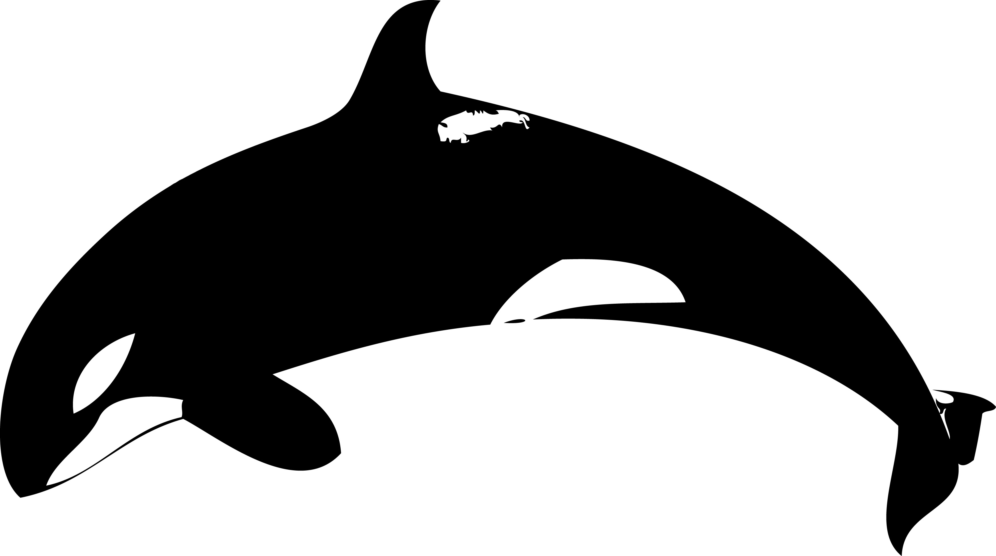 Orca clipart #6, Download drawings