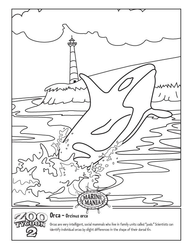 Orca coloring #13, Download drawings