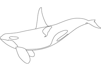 coloring pages for kids orca | Orca coloring, Download Orca coloring for free 2019