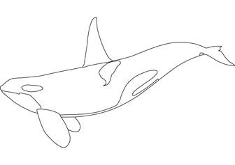 Orca coloring #20, Download drawings