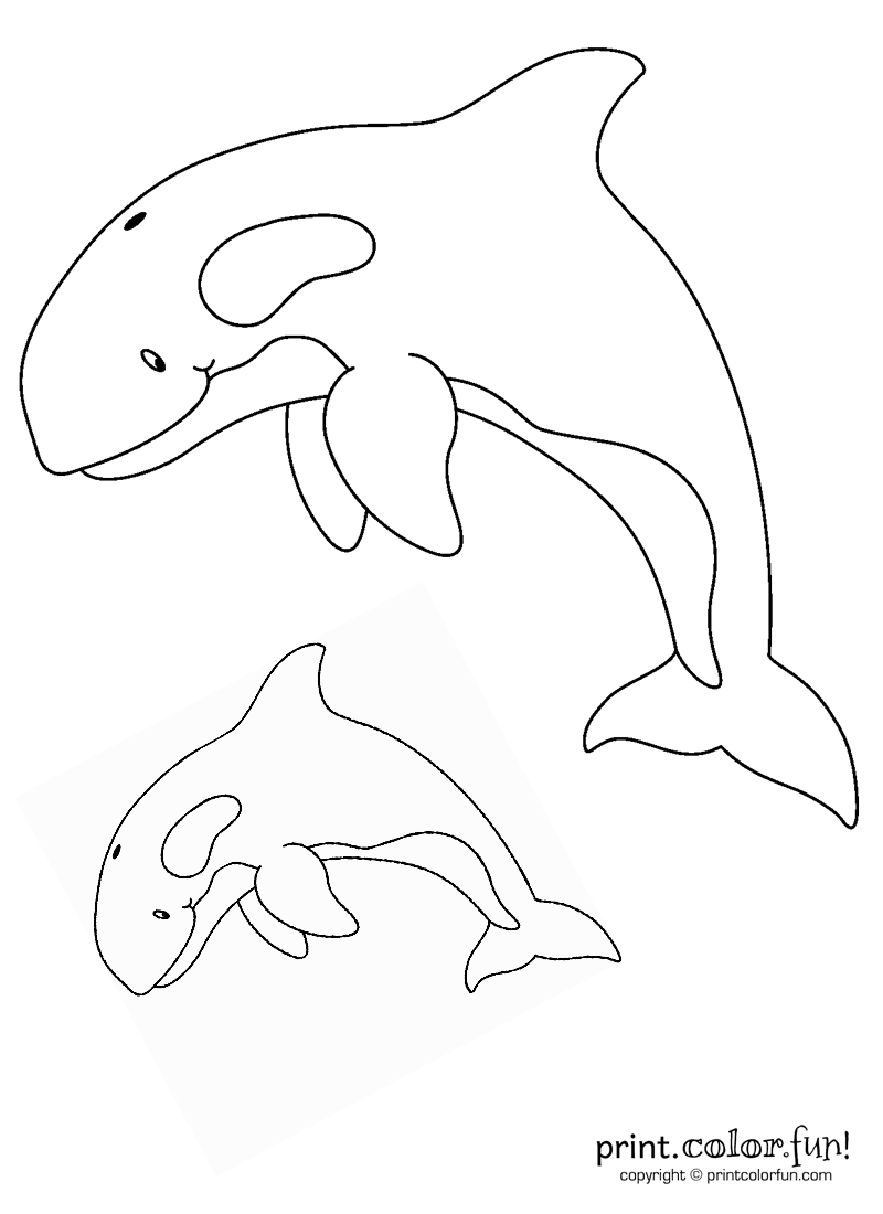 Orca coloring #14, Download drawings
