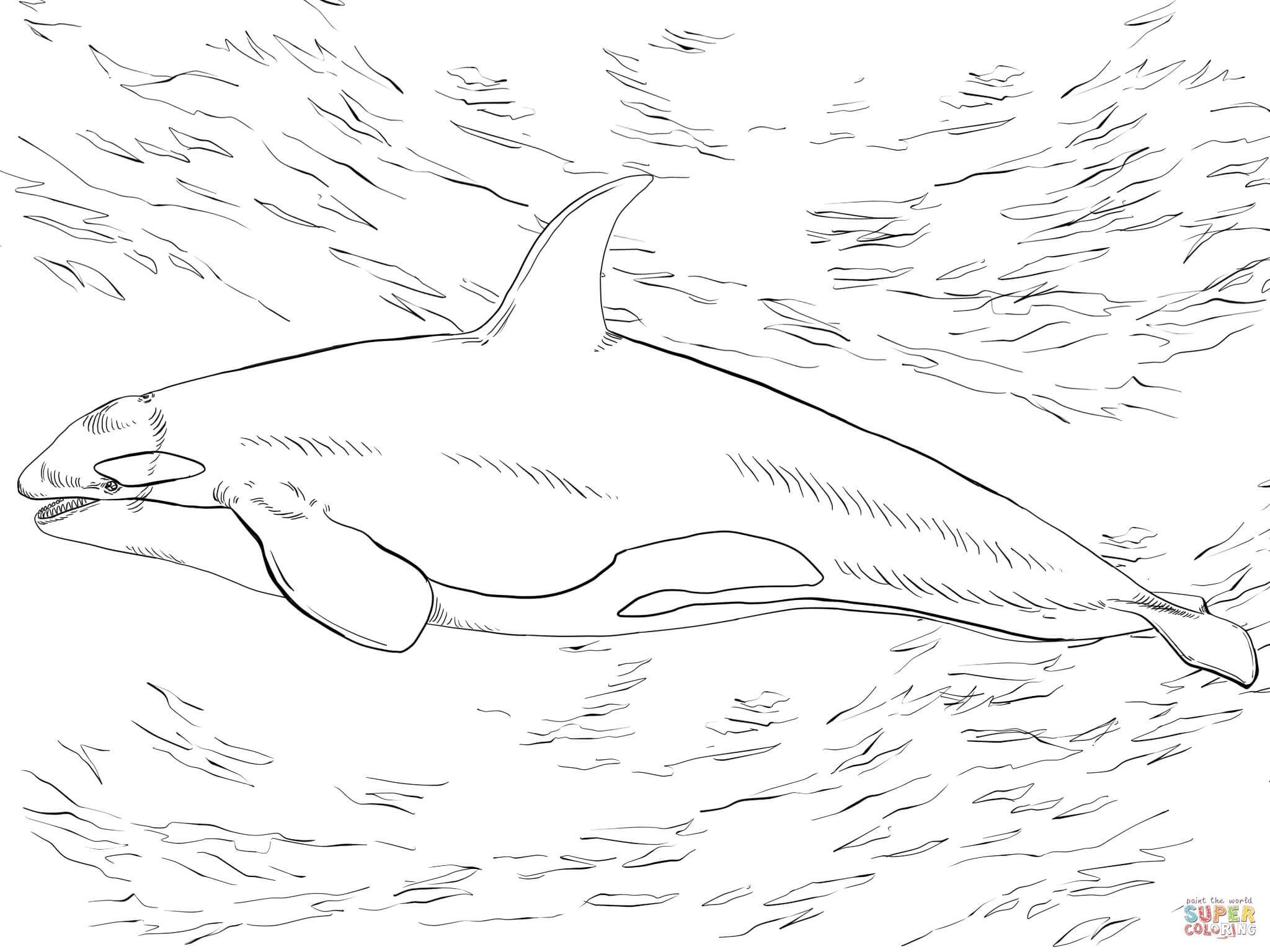 Orca coloring #1, Download drawings