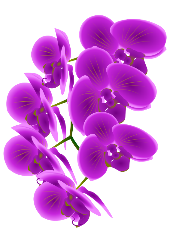 Orchid clipart #17, Download drawings