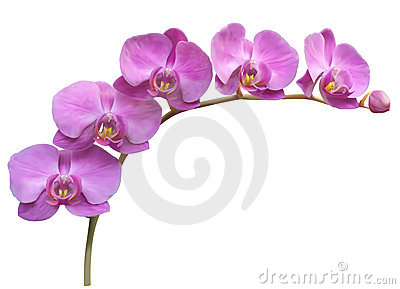 Orchid clipart #9, Download drawings